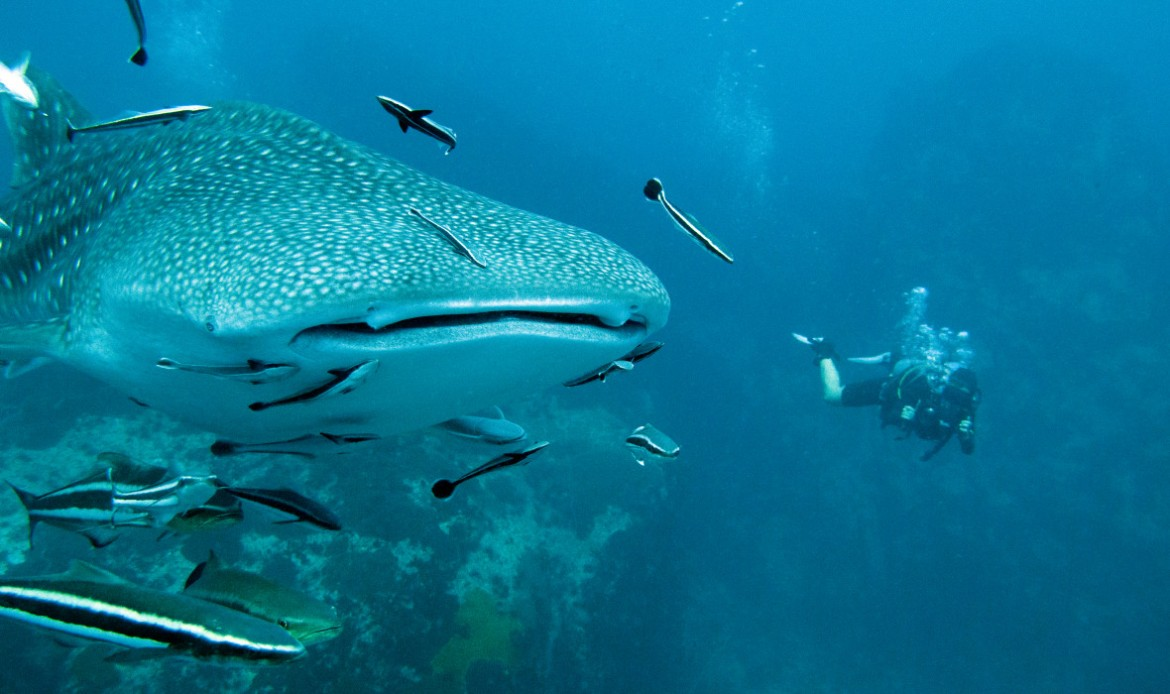 dive-protea-banks-south-africa